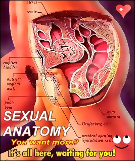SEXUAL ANATOMY